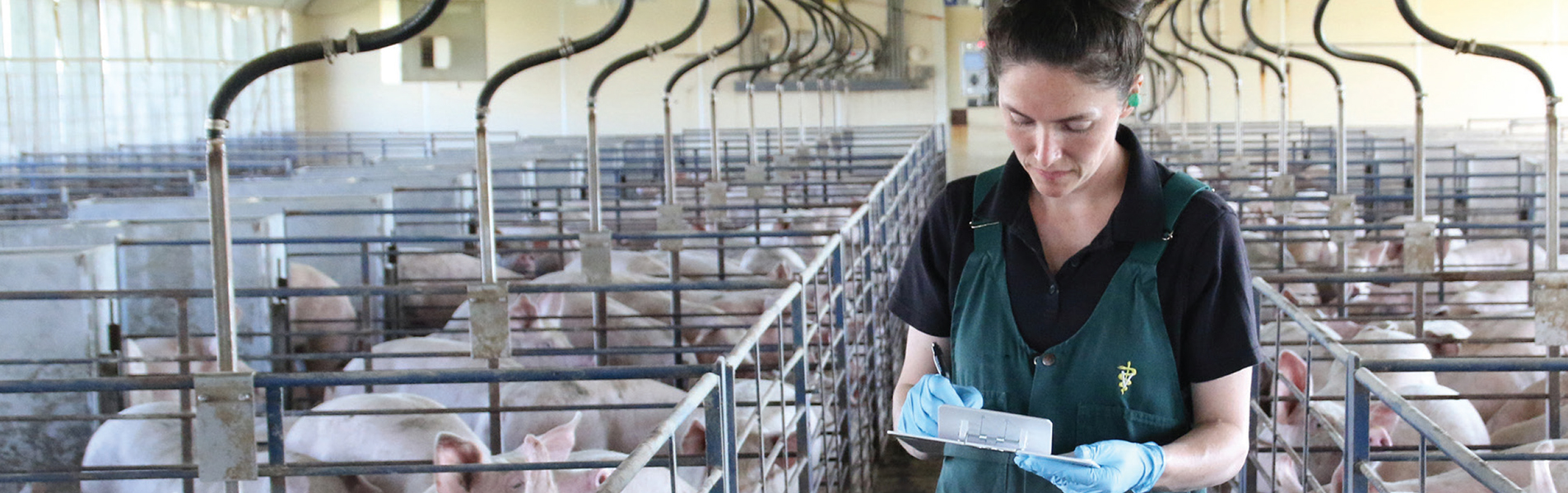 Veterinarians find easier way to collect diagnostic samples