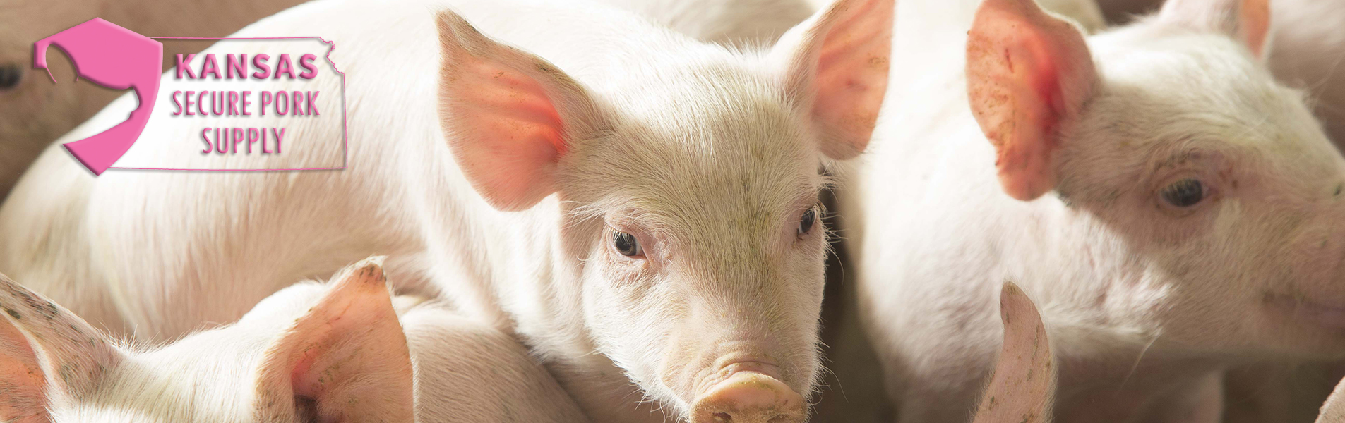 KPA encourages farms to complete Secure Pork Supply plans